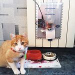 Make a Smart Automatic Pet Feeder with Arduino Uno