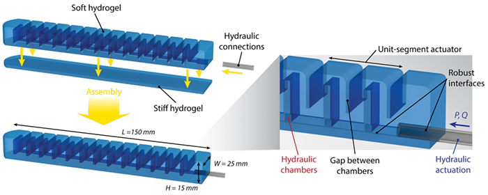 hydrogel robot