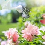 How to Find Out When Your Plants Need Watering with a Soil Sensor